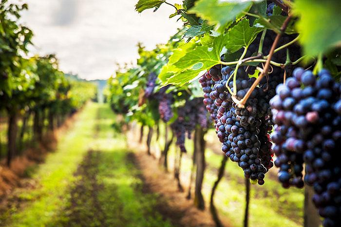 Vini bio vegani vendita online